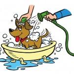 Pet Wash Dog