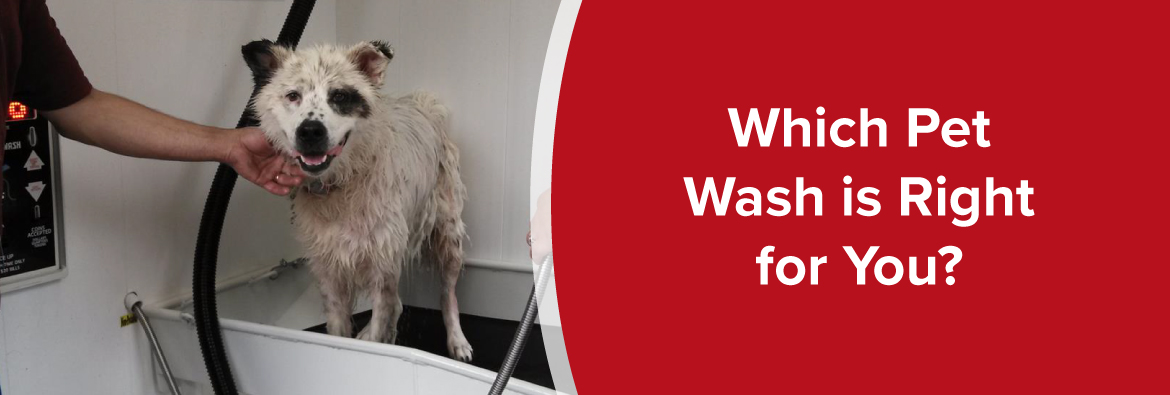 which pet wash is right for you