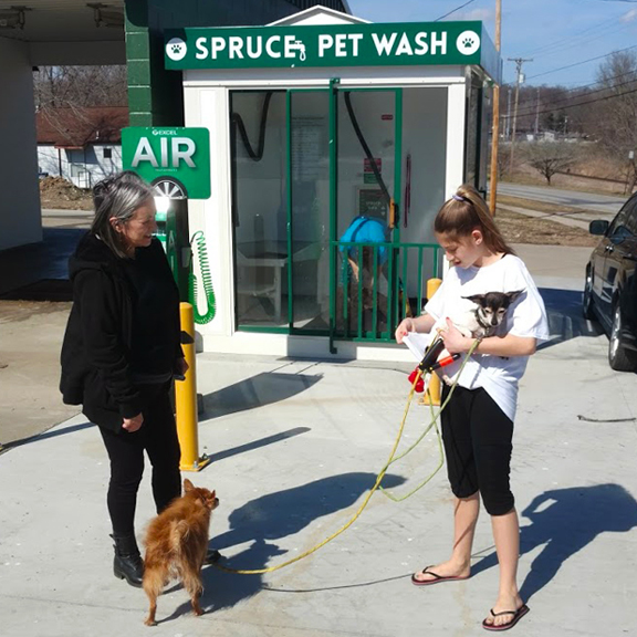 Customers washing multiple dogs at once at spruce pet wash.