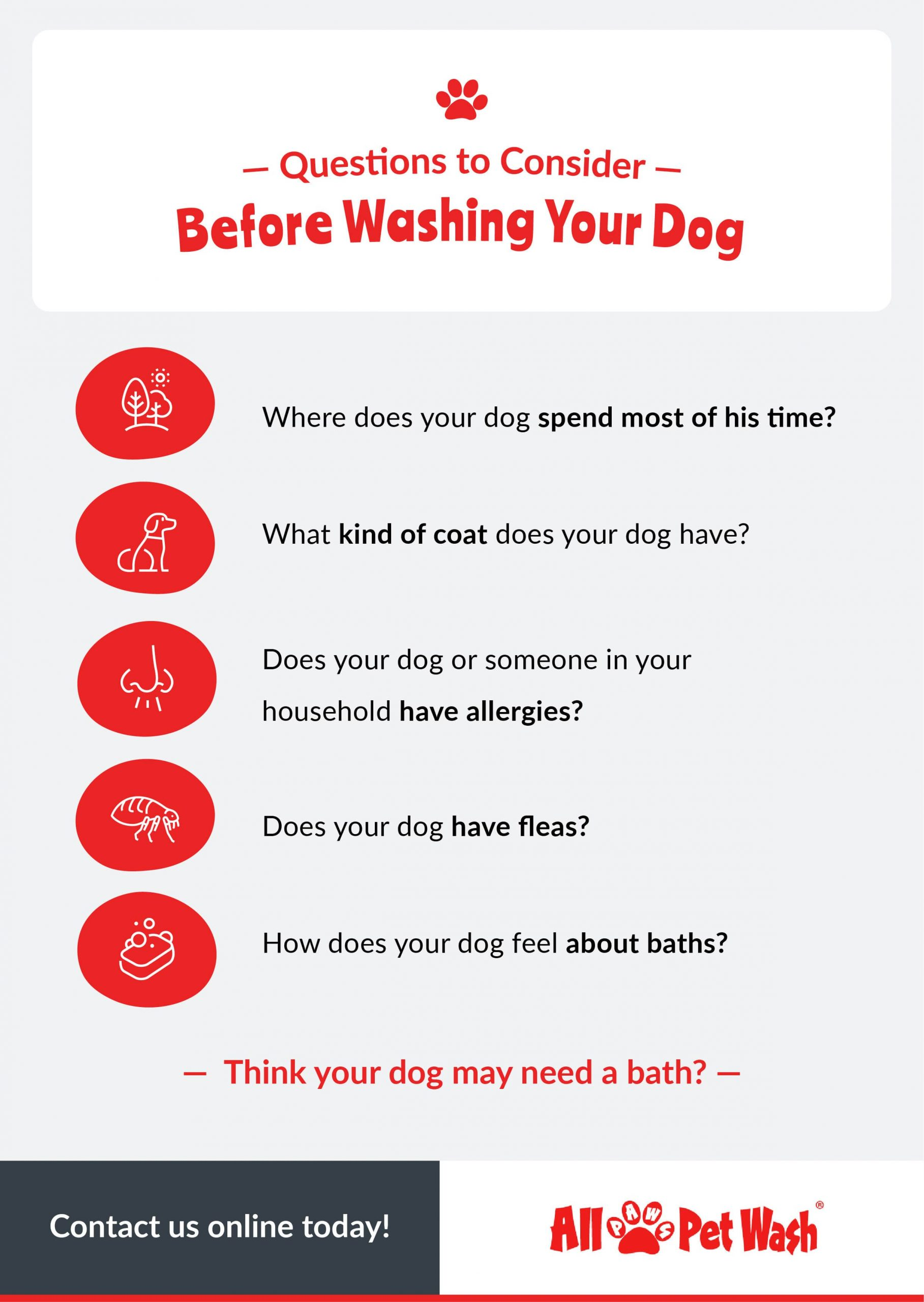 Micrographic - Questions to Consider Before Washing Your Dog