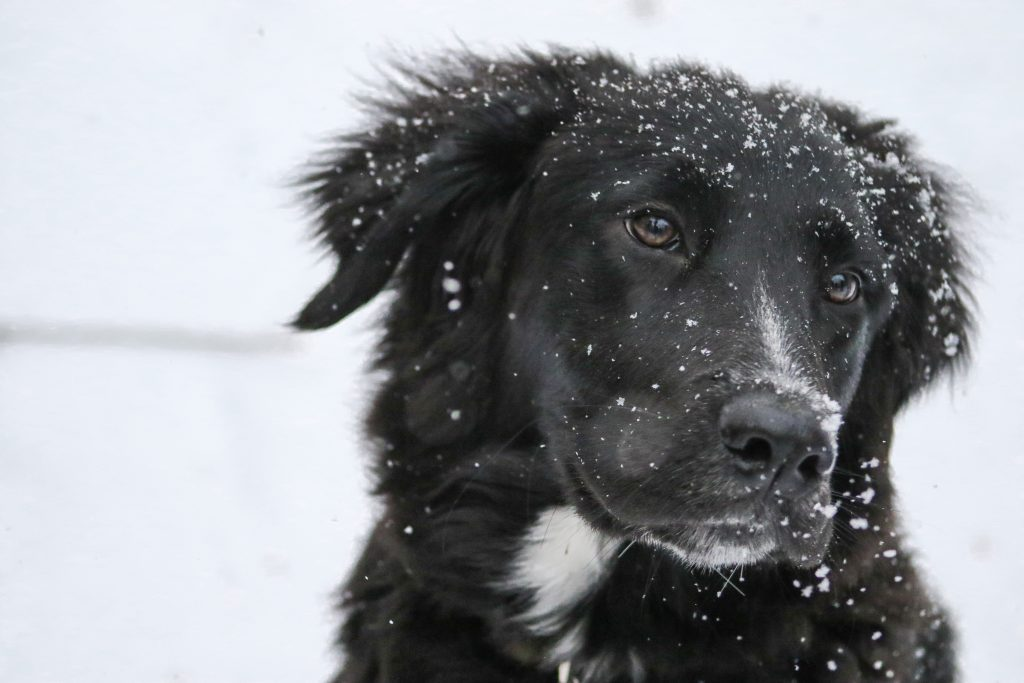 Tips for Washing Your Pets in the Winter